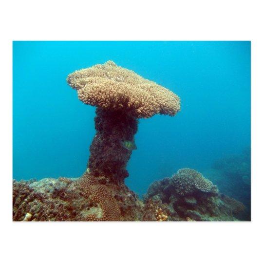 Coral Mushroom Postcard