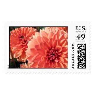 Coral Orange Dahlia Postage Stamps