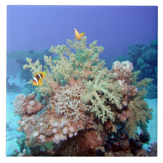 Coral Outcrop with Clowns Tile