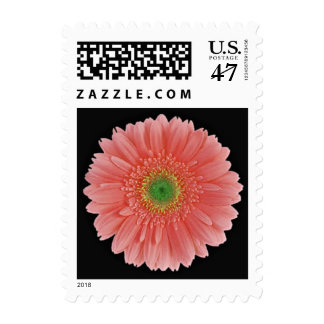 Coral Peach Green Gerbera Daisy Postage Stamps