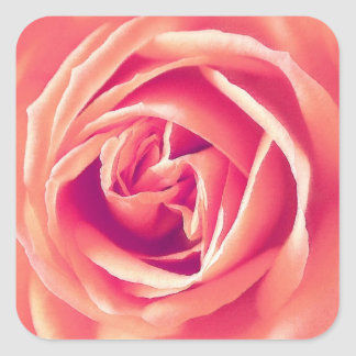 Coral pink rose print square sticker
