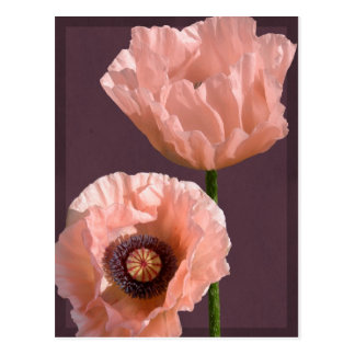 Coral Poppies Postcard