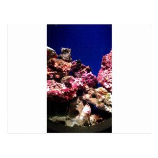 coral postcard