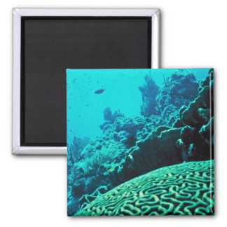 Coral Reef 2 Inch Square Magnet