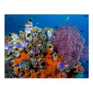 Coral Reef and Fish Postcard