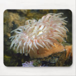 Coral Reef Anemone Mousepad
