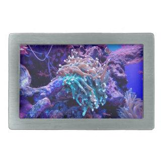Coral Reef Belt Buckle