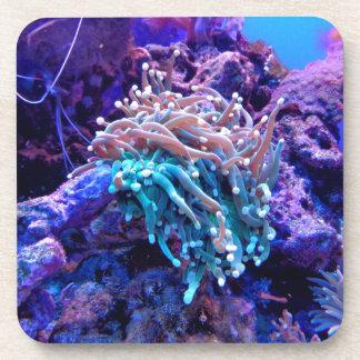 Coral Reef Beverage Coaster