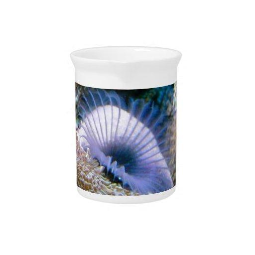 Coral reef beverage pitchers