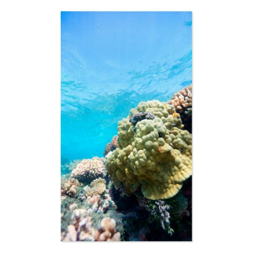 Z Coral Card Coral reef Doub...
