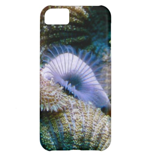 Coral reef cover for iPhone 5C