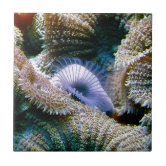 Coral reef ceramic tile