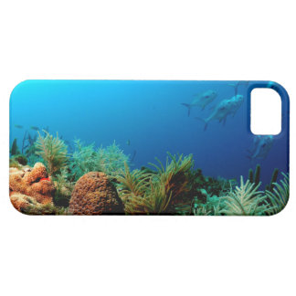 Coral Reef, Dry Tortugas National Park, Florida iPhone SE/5/5s Case