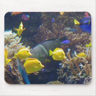 Coral Reef Fish Mouse Pad