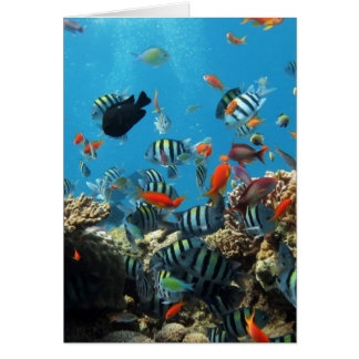 Coral Reef Fish Naturescape Card