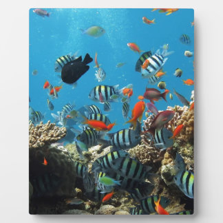 Coral Reef Fish Naturescape Display Plaques