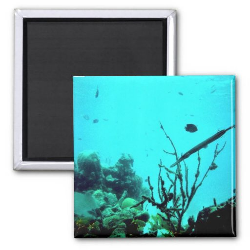 Coral Reef Magnets