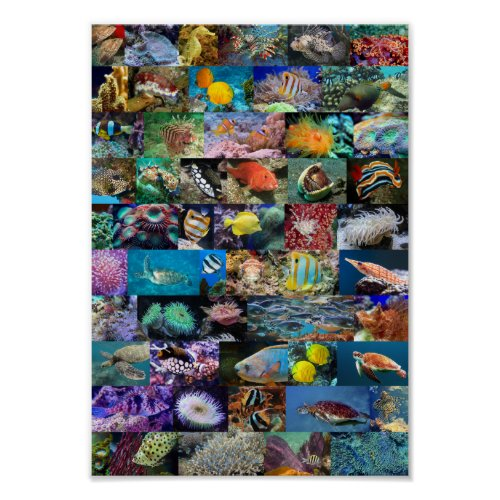 Coral Reef Marine Life Fish and Animals Poster