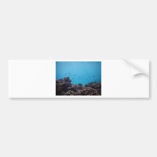 Coral Reef of Pacific Ocean Bumper Sticker