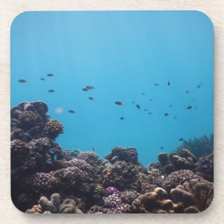 Coral Reef of Pacific Ocean Coaster
