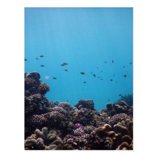 Coral Reef of Pacific Ocean Postcard