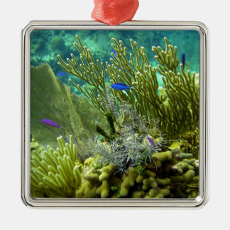 Coral reef christmas ornaments