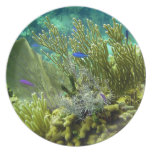 Coral reef party plates