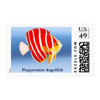 Coral Reef Peppermint Angelfish Postage
