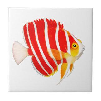 Coral Reef Peppermint Angelfish Tile