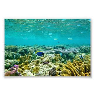 Coral Reef Photo Print