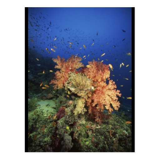 Coral Reef Post Cards
