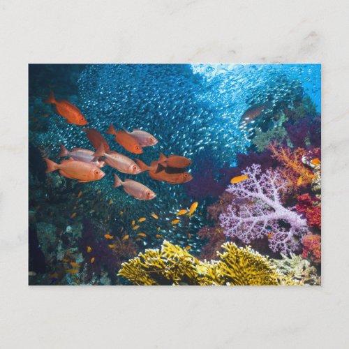 Coral Reef Scenery  Bigeye Or Goggle_Eye Postcard