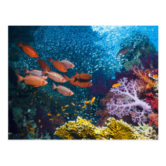 Coral Reef Scenery | Bigeye Or Goggle-Eye Postcard