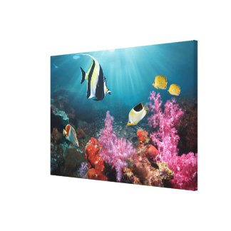 Coral Reef Scenery | Moorish Idol Canvas Print