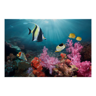 Coral Reef Scenery | Moorish Idol Poster