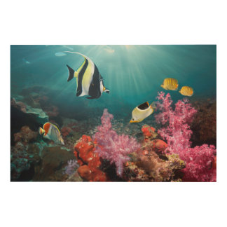 Coral Reef Scenery | Moorish Idol Wood Print