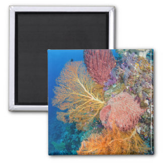 Coral Reef Scenic Magnet