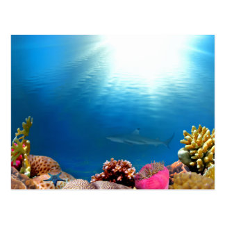 Coral Reef & Shark Postcard