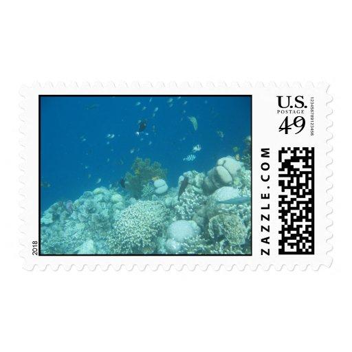 coral reef stamp