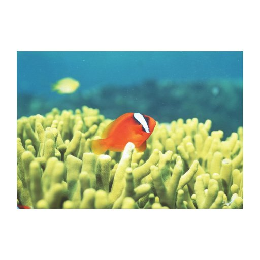 Coral reef teeming with tropical fish canvas print