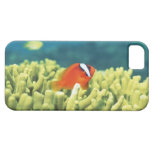 Coral reef teeming with tropical fish iPhone SE/5/5s case