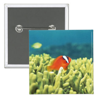 Coral reef teeming with tropical fish pinback button