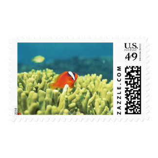 Coral reef teeming with tropical fish postage
