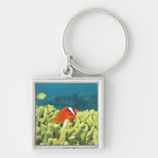 Coral reef teeming with tropical fish Silver-Colored square keychain