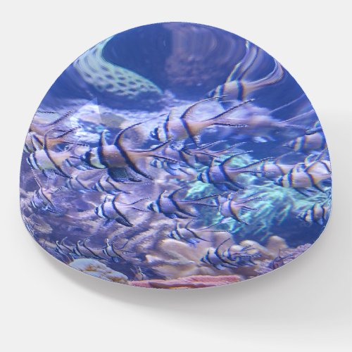 Coral reef tropical fish paperweight