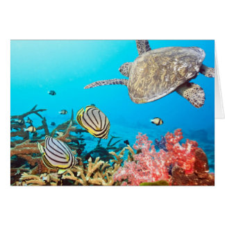 Coral Reef Turtle Naturescape Card
