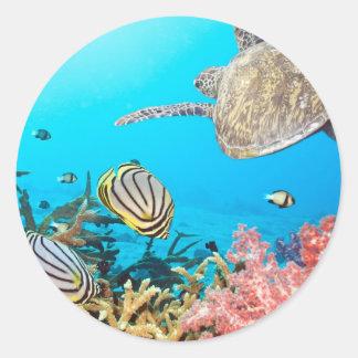 Coral Reef Turtle Naturescape Classic Round Sticker
