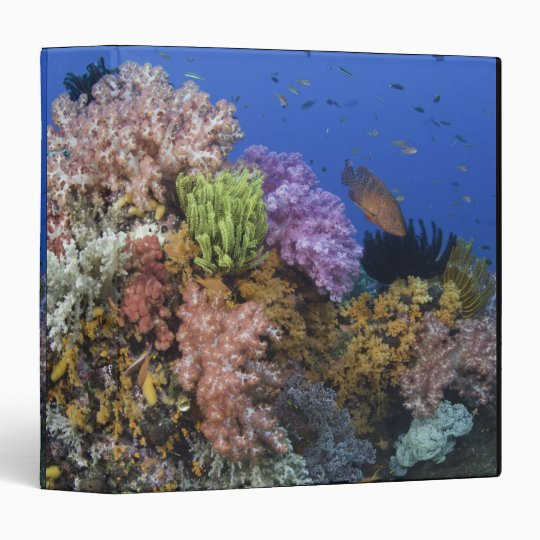 Coral reef, uderwater view binder