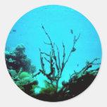 Coral Reef, Virgin Islands Sticker