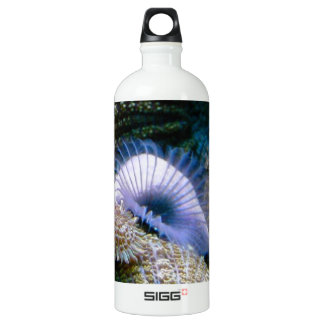 Coral reef water bottle